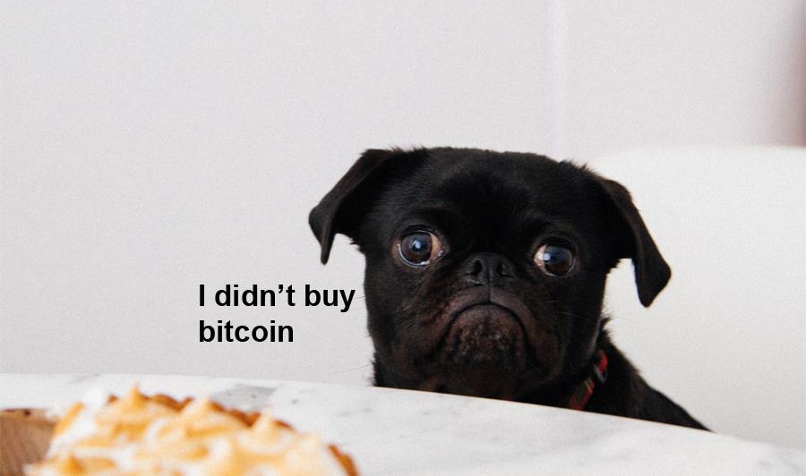 pure savage memes sad dog i didnt buy bitcoin